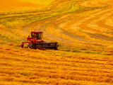 Combine Swathing Crop  Palouse  Washington  USA