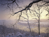 Snow-Covered Trees at Sunset  Cades Cove  Great Smoky Mountains National Park  Tennessee  USA