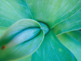 Agave Plant Detail  University of North Carolina at Charlotte Botanical Gardens  USA