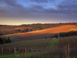 Sunrise on Knudsen Vineyards in Red Hills above Dundee  Oregon  USA
