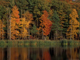 Wetlands in Fall  Peverly Pond  New Hampshire  USA