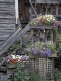 Flower Boxes on Whidbey Island  Washington  USA