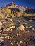 Cottonwood Leaves along Sulphur Creek  The Castle  Capitol Reef National Park  Utah  USA