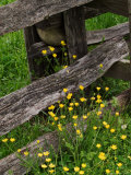 Rail Fence and Buttercups  Pioneer Homestead  Great Smoky Mountains National Park  N Carolina  USA