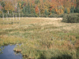 Scenic Woods Along Marshy Shore