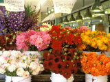 Dahlias For Sale at the Pike Street Market  Seattle  Washington  USA