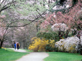 Couple Strolls a Flower-lined Path  Washington  USA