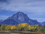 Aspen Trees along Oxbow Bend  Grand Tetons National Park  Wyoming  USA