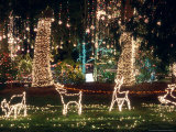 Christmas Light Display  Camano Island  Washington  USA