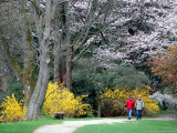 Couple Strolls through the Washington Park Arboretum  Seattle  Washington  USA