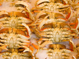 Dungeness Crab  Pike's Place Market  Seattle  Washington  USA