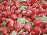 Pile of Ripe Radishes