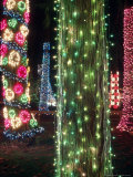 Christmas Lights Adorn Tree Trunks on Camano Island  Washington  USA