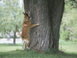 Cute Dog Trying to Climb and Barking up a Tree
