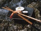 Elegant Sushi and Chopsticks Beside Rushing Water