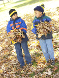 Little Boys Gathering Leaves in the Park
