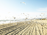 Flock of Seagulls Flying Across Water and Sand