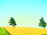 Two Trees in a Field Blowing in the Wind