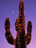 Lighted Wickenburg Cactus  AZ