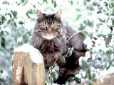 Portrait of Cat on Fence in Snow