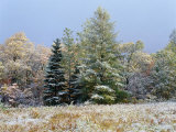 Early Snow Along Rte 73  Adirondack Mountains  NY