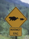 Marmot Crossing Sign  Aspen  CO