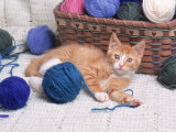 Kitten Playing with Balls of Yarn