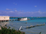 Conch Farm  Turks & Caicos Islands
