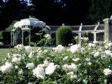 Waddesdon Manor Garden  England