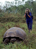 Woman and Giant Tortoise  Galapagos Island  Ecuador