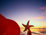 Starfish at Sunrise  Papua New Guinea