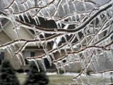 Close View of Tree Branches After Ice Storm