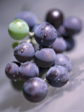 Grapes  Long Island  New York