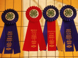 Ribbons For Competition  4-H Fair  Chester  NJ