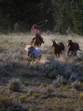 Cowboys Rounding Up Horses