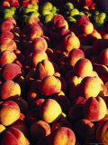 Peaches and Pears  Grand Haven  MI