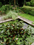 Close-up of the Formal Pond with Nymphaea (Water Lily) at Alderley Grange  Gloucestershire