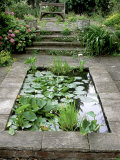 Small Formal Pond with Aquatic Planting