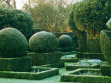 Topiary Yew Covered with Frost Hazlebury Manor  Wiltshire October