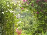 View Through Trellis Arch of Clematis Etoil Violette into Garden