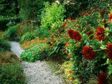 Gravel Path Meandering Through Hot Border with Planting of Spiky Red Dahlias