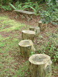 Simple Wooden Bench & Log Stools in Shady Wooland Garden