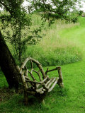 Rustic Wooden Bench Beneath Old Malus (Apple) Tree  Meadow in View at Cooks Farm Garden  Somerset