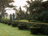 Yew Topiary  Misty View Across Italiante Garden Tapeley Park  Devon  Late Summer