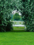 Pyrus Salicifolia Pendula Formed into an Arch  with White Bench as Focal Point on Lawn
