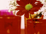 Single Red Crysanthemum in Glass Vase Surrounded by Ornamental Tea Lights