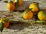 Clementine Fruits &amp; Leaves (Citrus Reticulata &quot;Clementine&quot;)