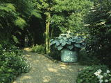 "Shady Border  Foliage Plants and Hosta in Large Container Gravel Path  ""Orchards"""