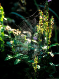 Cobweb Lit up by Sunlight  September