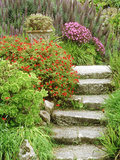 Stone Steps Leading to Middle Terrace  Geranium  Echium & Succulents  Isles of Scilly